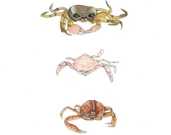 Crabbies, Watercolor Coastal Illustration, Art Print