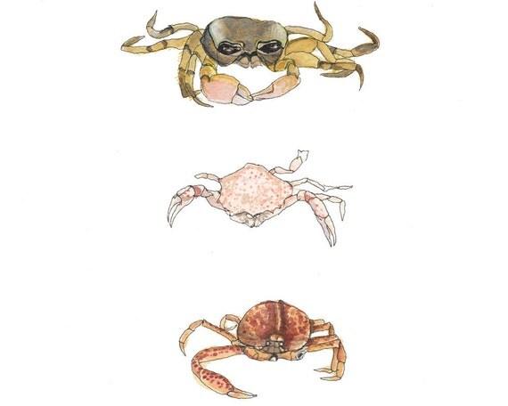 Crabbies, Watercolor Coastal Illustration, Art Print
