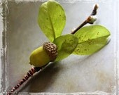 Acorn And Pussy Willow Boutonniere. Groom Groomsmen. Green Brown Branch Leaves. Wedding Weddings Spring Summer Fall