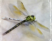 Dragonfly Bobby Pin - An Ethereal Garden Inspired Hair Accessory - Weddings - Whimsical Outdoor Wedding Accessories