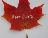 Real Autumn Maple Leaf Hand Cut - Inscribed Leaf Art - Our Love by evLien Designs