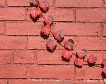 Fall Red Brick, Red Ivy Photograph, autumn, leaf, seasons, nature