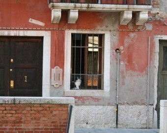 Venice Cat Sitting in a Window, Italy, Door, balcony, plants, travel, photograph