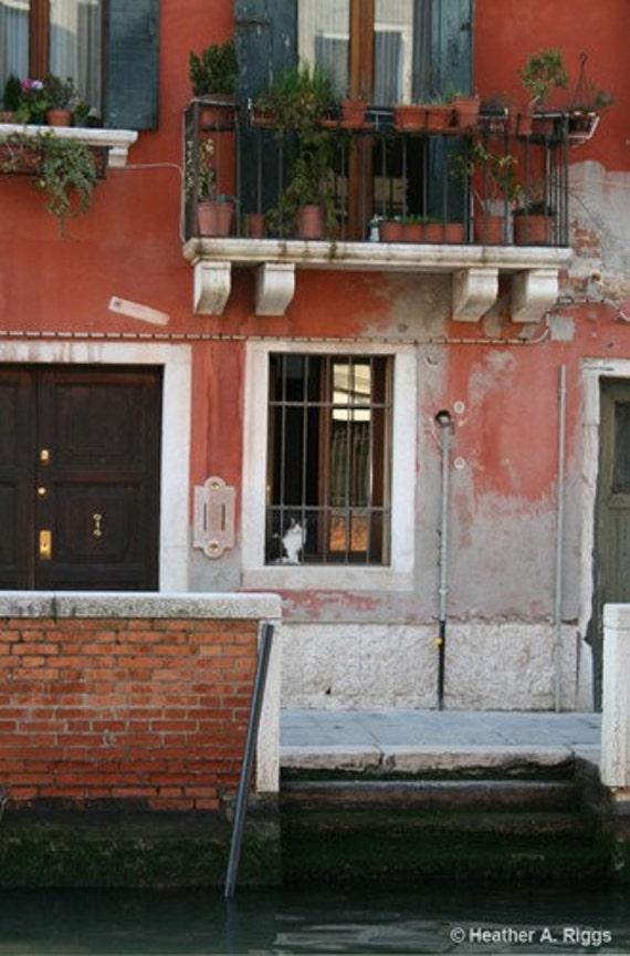 Venice Cat Sitting in a Window, Italy, Door, balcony, plants, travel, photograph