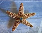 Starfish Boutonniere, Beach Wedding