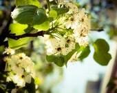 Hoboken Photograph - Hoboken in Bloom - Blossoms - Flowers - Spring - Green - White