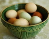 Fresh Eggs - 8 by 10 - emawilliamson
