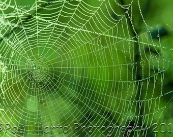 """Spiderweb with Early Morning Dew Drops, Photograph, Presented as an 8"""" x 12"""" Print"""