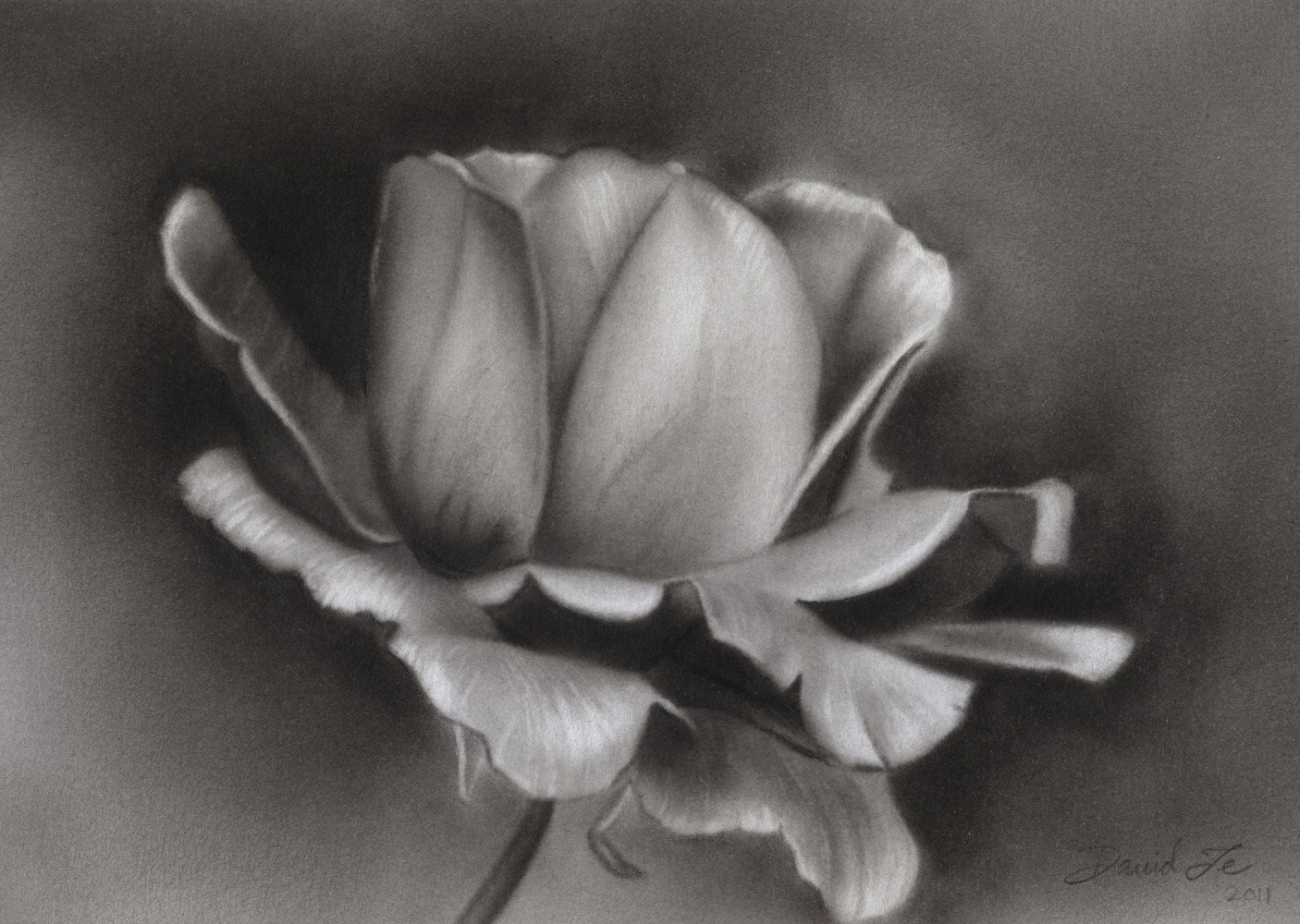 This is a photo of Terrible Charcoal Rose Drawing