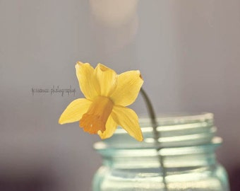 Daffodil Photography, Gray and Yellow Art, Daffodil Flower Photography, Yellow Daffodil Art, Shabby Chic Art, Daffodil Print, Still Life
