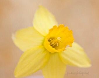 Daffodil Photography, Yellow Flower Photography, Daffodil Art, Yellow Flower Art, Yellow Nursery, Daffodil Print, Shabby Chic Decor, Garden