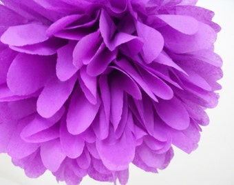 Lavender ... 1 Pom
