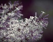 Heaven Scent - Digital Download - lilac, macro, spring, mother, floral, botanical, nature photography