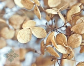 Endless Summer - Large Digital Download - hydrangea, floral, botanical, macro, blue, beige, pastel, soft hues, garden, summer, autumn
