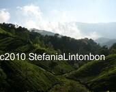Munnar, India - Tea Plantation - Digital JPEG File Emailed to you