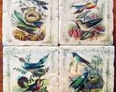 Coasters - Colorful Hummingbirds, Natural History, 1852