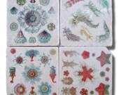 Beach Decor, Natural History, Sealife Study Coasters