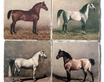Equestrian Horses Vintage Illustrations, Stone Coasters