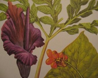 Vintage Trio LARGE Botanical  Colorful Wildflower Prints Australia, Himalaya, China, Africa