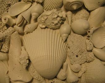 Sea Fossil  I Sanibel Your personal Original Square OOAK Sea Sculpture, 10 X 10 X 2 ocean life fossils seashell shells beach  art textured