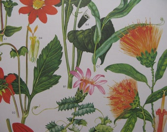 "Pair Pretty Reds Oranges Greens Central & South American Large 9"" by 12"" Pair BoTaNicAl Prints,  highly detailed, bold graphics"