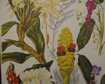 Lush Tropical Lovelies,  Vtge Trio LARGE Botanical Colorful Wildflower Prints Asian, Central & South America, Australia, Red Orange lushious