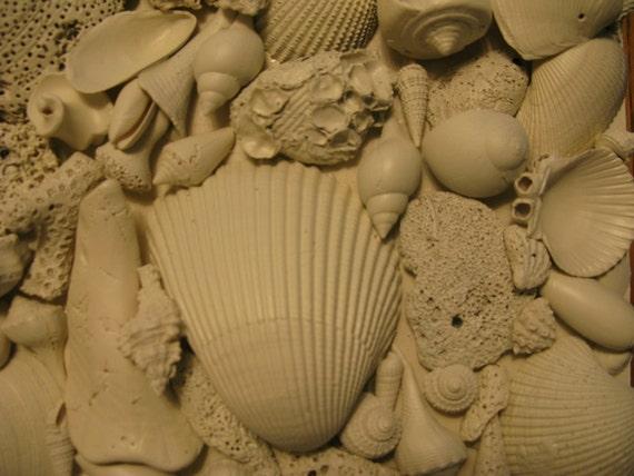 Sea Fossil  I, Sanibel,  Your personal Original Square OOAK Sea Sculpture, 10 X 10 X 2