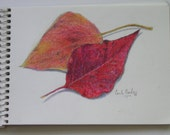 Sketchbook Original Colored Pencil, Autumn Leaves by Carla