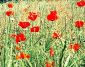 Photos for Walls: Red Poppies in Tall Grass Field Fine Art Print, Provence, France, 8x10, by ARTindividual on Etsy