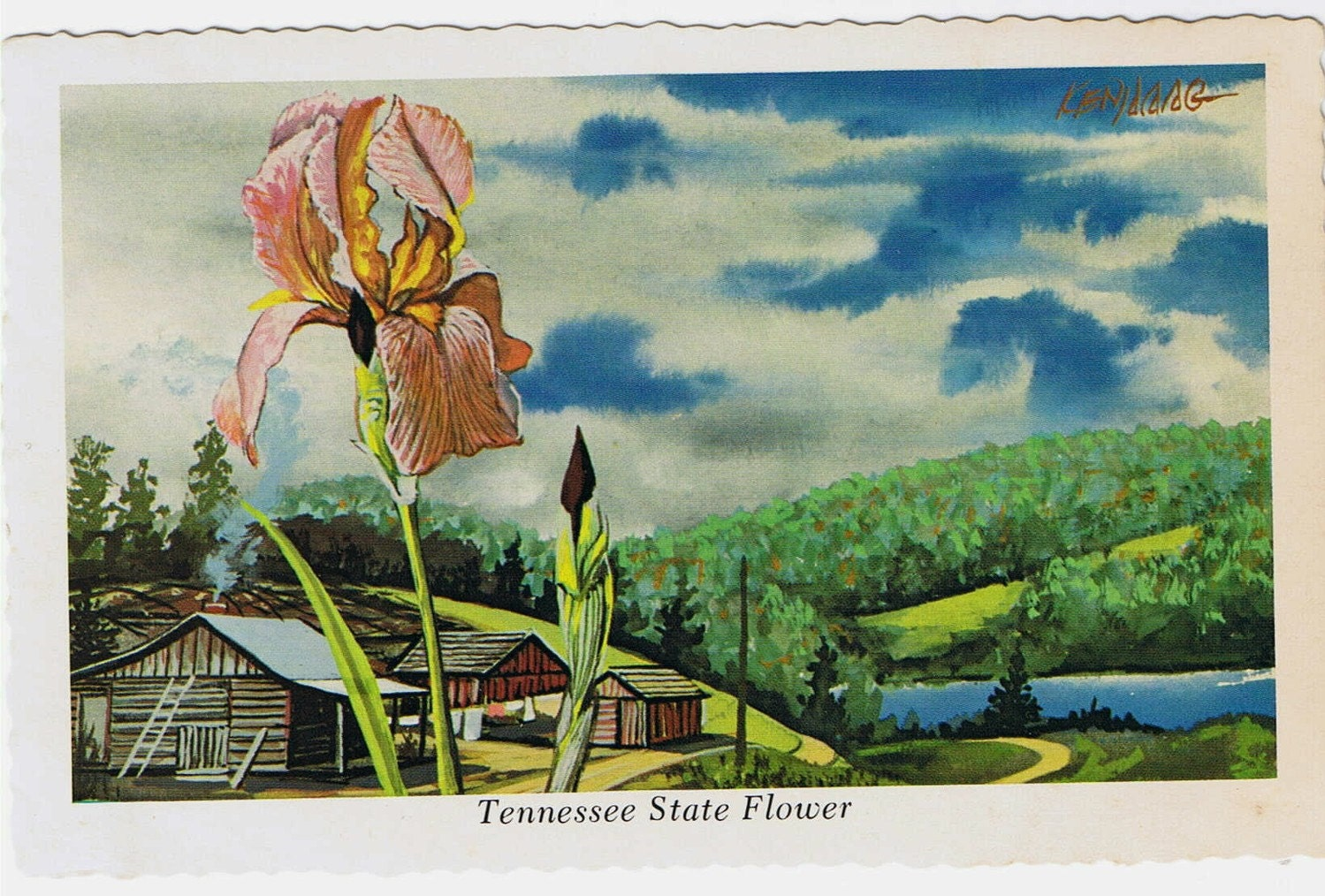 Vintage Postcard Tennessee State Flower Ken Haag State