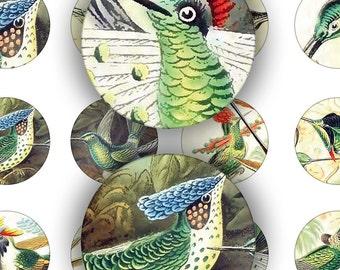 Digital Instant Download Collage Sheet 1 Inch Circles Bottle Caps Vintage Antique Old Hummingbird Birds Altered Art (1)