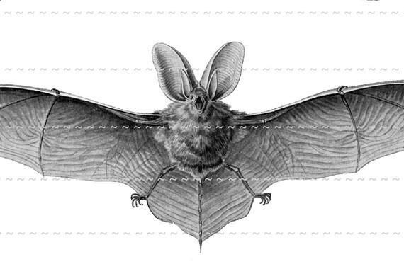 Digital Download Collage Sheet Vintage Bats Make DIY Halloween Props Decorations (92)