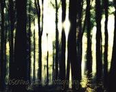 Dawn light (12 x 10) Fine Art Photography print