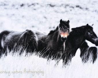 Exmoor Ponies Fine Art Photography Download