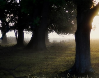 New Forest Dawn   Fine Art Photography Download