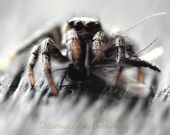 Said the spider to the fly  Fine Art Photography Download
