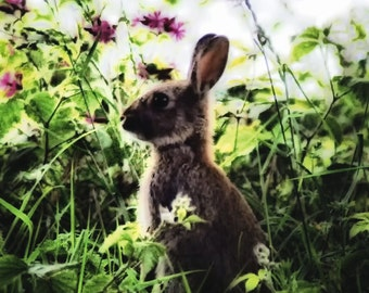 Rabbit Fine Art Photography Download