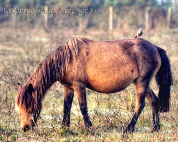 New forest  Pony  Fine Art Photography Download