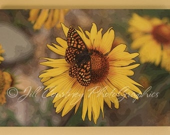 Butterfly on Sunflower - 20 x 30 photo art on 1 inch canvas gallery wrap by Jill Courtney