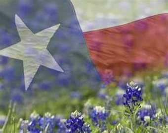 Texas Bluebonnet Seeds  Buy Half An Ounce Now And Be  Ready to Scatter Any Time May Through November