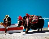 Stylish Yak - Kampala Pass, Tibet Lake Azure Water Man Mountains - 5x7 (13x19cm) Color Photo Print - Travel Fine Art Photography