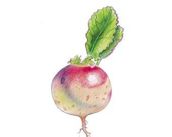 Turnip