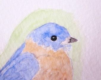 Eastern Bluebird Original Watercolor Painting