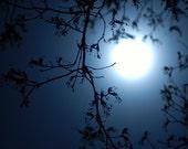 Blue Moon - 5x7 Photo Print - Fine Art Photography SALE