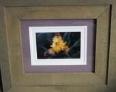 Iris photograph matted in custom frame
