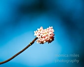 Emergence-8x10 Fine Art Photography Print