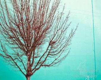Winter Burst - 8x10 Fine Art Photography Print