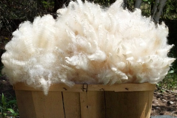 One Pound of Super Crimpy East Friesian/Corriedale Wool - Raw Unwashed Fiber Spinning Wheel