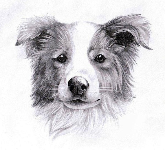 20% Discount - Custom Pet Portrait Drawing Sketch From Photo 12X8 - Pencil / Charcoal Medium