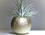 Tillandsia Pod Container // Gold, Copper, Silver or Lime Green // Home and Garden // Gifts under 10